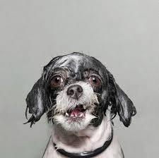 wet dog 2