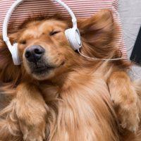 Músicas de reggae ajudam cães a relaxar quando os donos não estão por perto