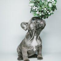 7 fatos que você não sabia sobre os cães