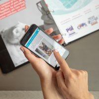 App brasileiro conecta pessoas que querem adotar pets