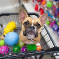 Novos cursos aproveitam expansão do mercado pet