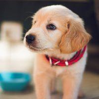 Ter um cachorro diminui risco cardiovascular