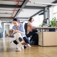 Como os cães podem ajudar a reduzir a ansiedade e o estresse no local de trabalho