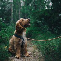 Como determinar a idade do seu cachorro em anos humanos