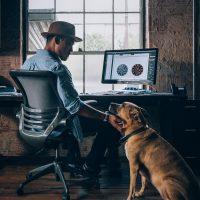 Cinco lições de liderança que você pode aprender com seu cão