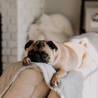 Seu cachorro é ansioso?