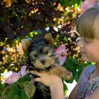 Influência das patas: crianças que crescem pet têm mais inteligência emocional