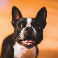 Terapia com animais: vídeo chamadas com cães aliviam estresse