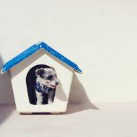 Aumenta adoção de animais durante isolamento