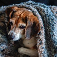 Cuide bem dos seus cachorros no inverno