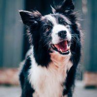 7 coisas que você não sabia sobre cães, de acordo com a ciência