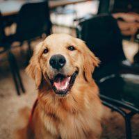 4 curiosidades sobre dentes de cachorro