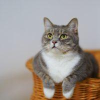7 coisas que a ciência já sabe sobre os gatos
