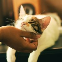 Fazer carinho no seu pet ajuda a reduzir o stress