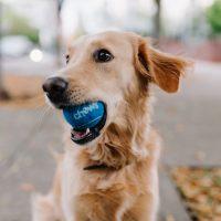Comportamentos curiosos dos cães e explicações científicas