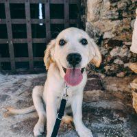 Pesquisa mostra que adoção de pets é tendência no Brasil