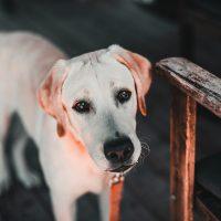 Dicas para adaptar a casa para cães e gatos