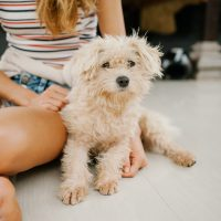 5 dicas para fazer os cachorros obedecerem com comandos simples
