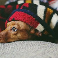 Principais cuidados com os animais no outono