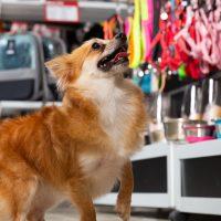 Brasil está entre os três maiores mercados mundiais de produtos pet