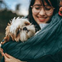 Qual é o cão mais popular do mundo em 2021?