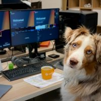 Habilidades corporativas que tutores de pets desenvolvem com mais facilidade